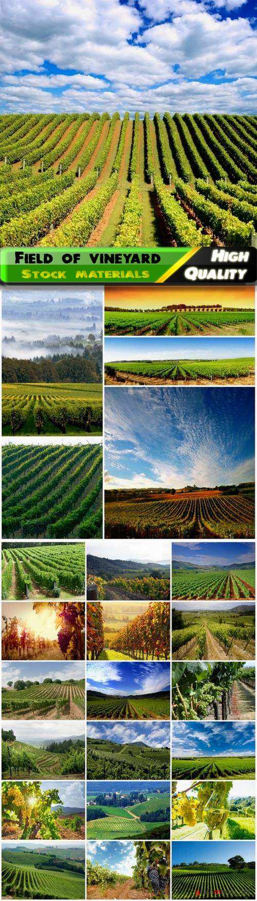 Nature landscape with field of vineyard - 25 HQ Jpg
