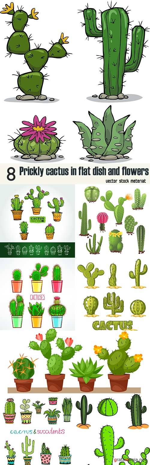 Prickly cactus in flat dish and flowers