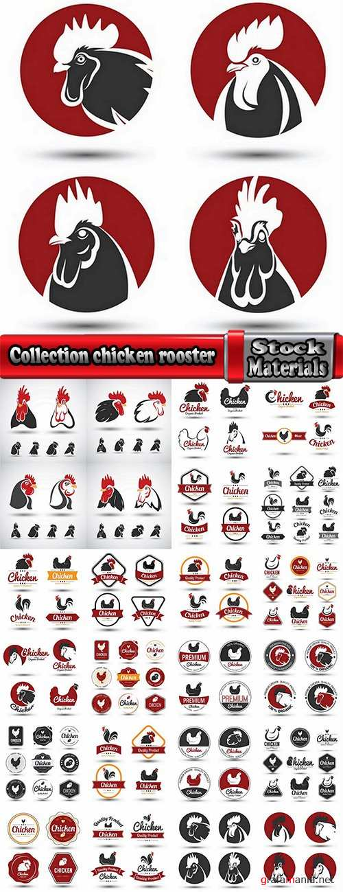 Collection chicken rooster label sticker vector image 25 EPS