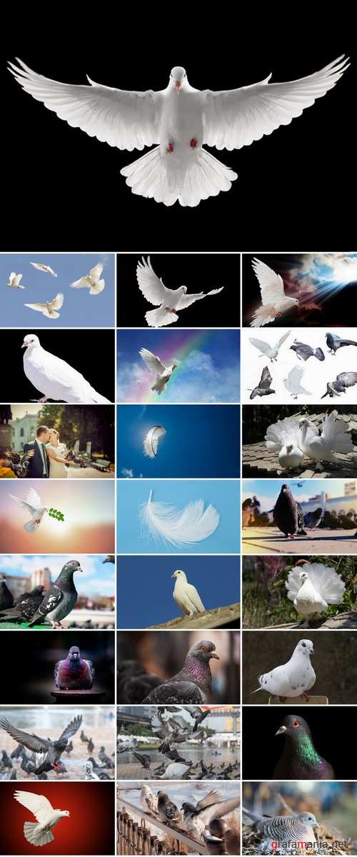 Collection of white dove feather wing 25 HQ Jpeg