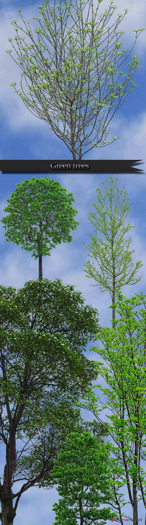 Green trees on a transparent background