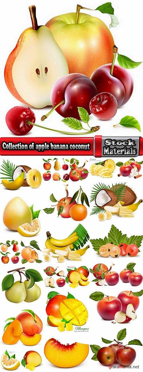 Collection of apple banana coconut orange peach currant berry fruit vector image 25 EPS