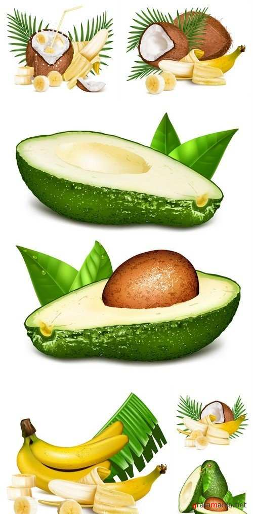 Coconuts and ripe yellow bananas Avocados with leaves 6X EPS
