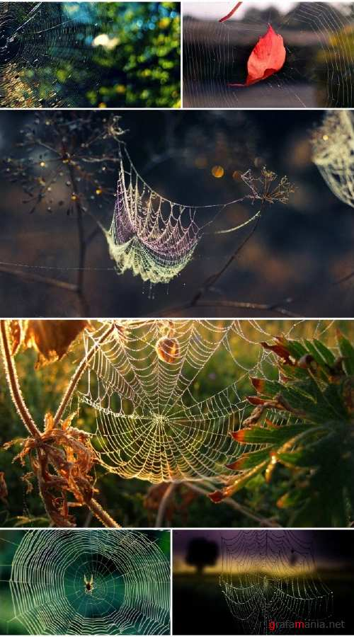 Spider Web (Pack 1)