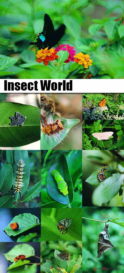 Insect World 1