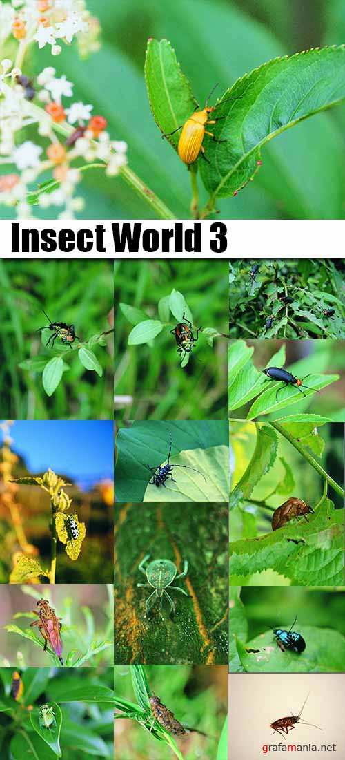 Insect World 3