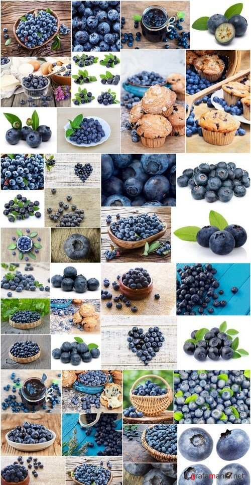 Fresh Bilberry - 41xUHQ JPEG Professional Stock Images