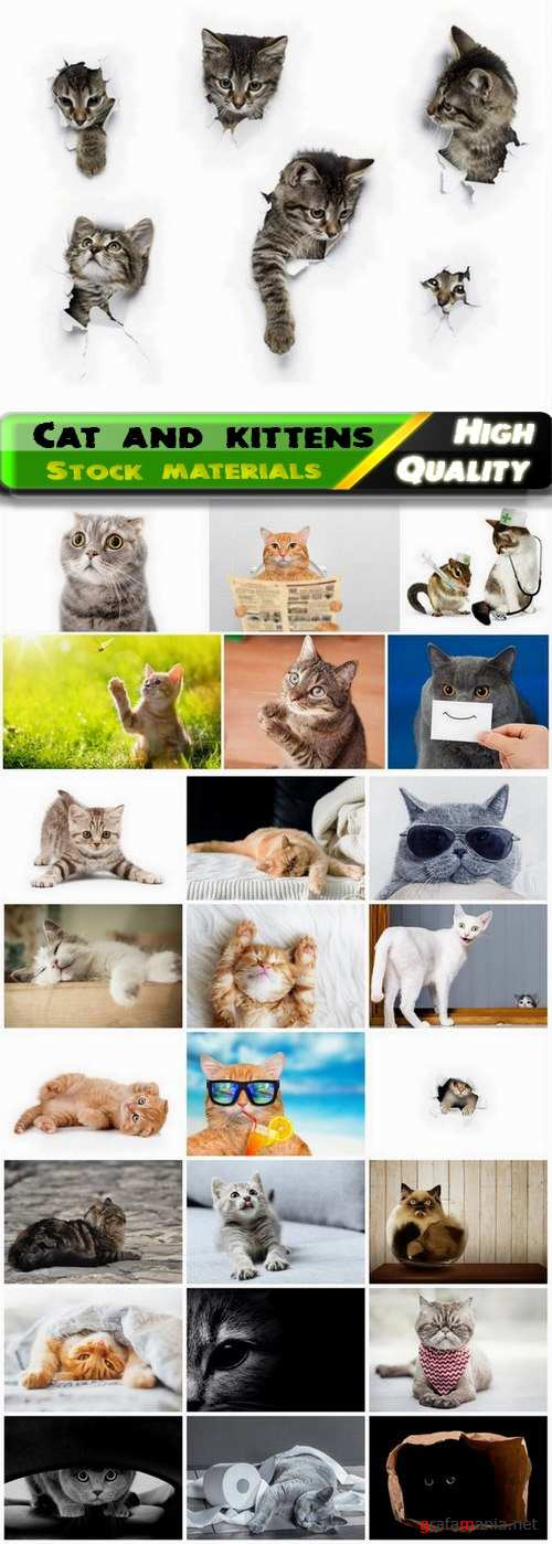 Funny cat and kittens pets and animals 25 HQ Jpg