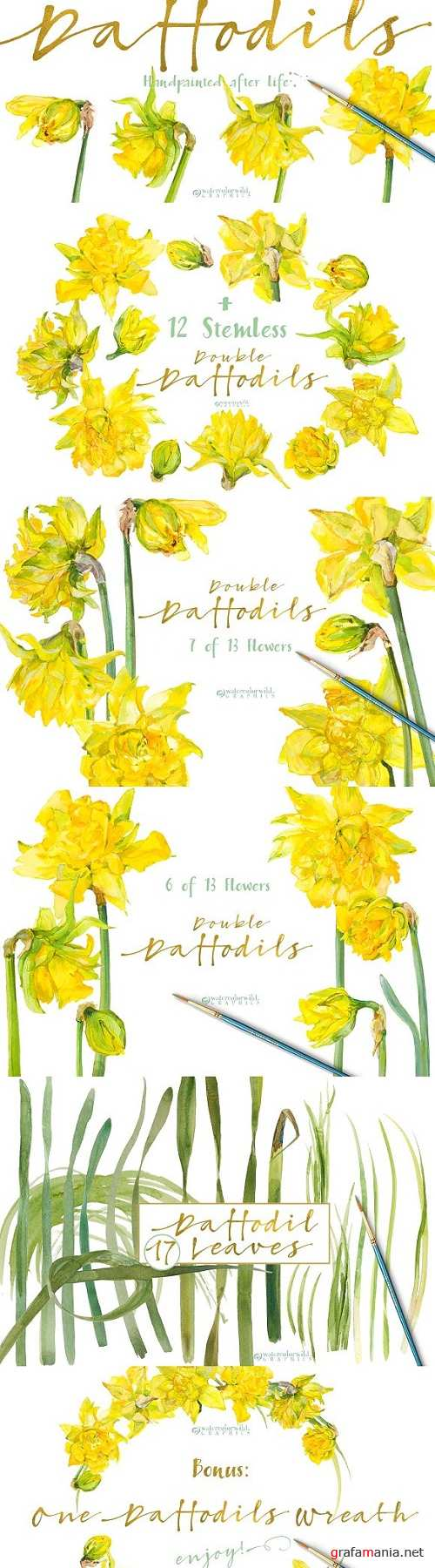 Double Daffodils - 1340329