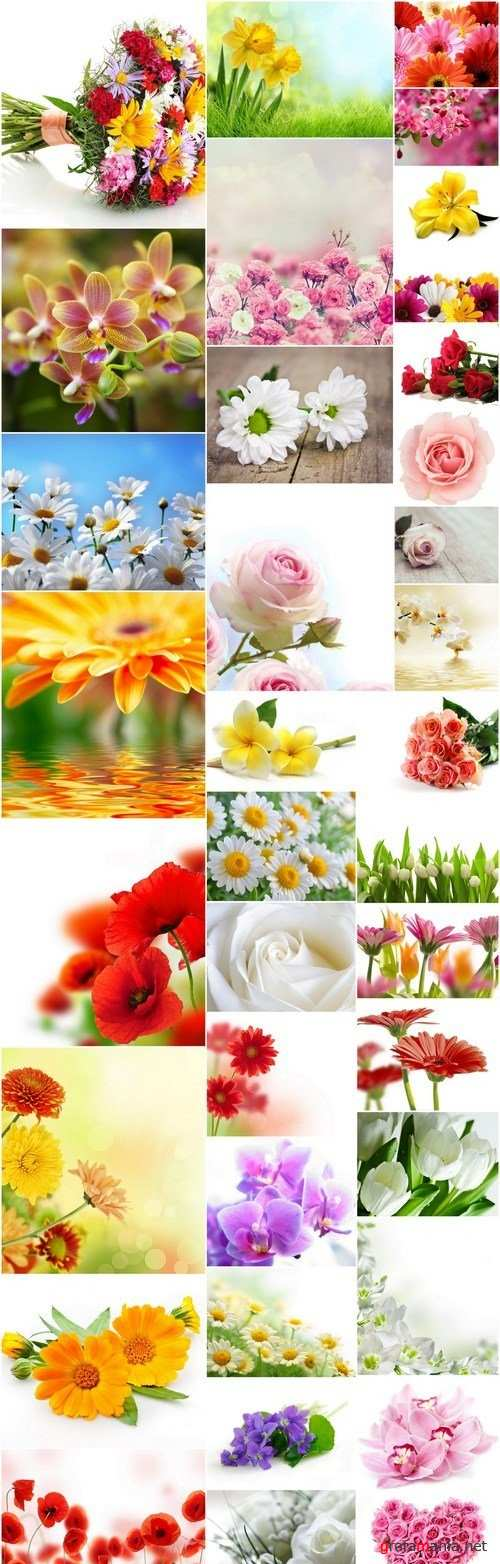 Beautiful Spring Flowers #4 - 40 HQ Images