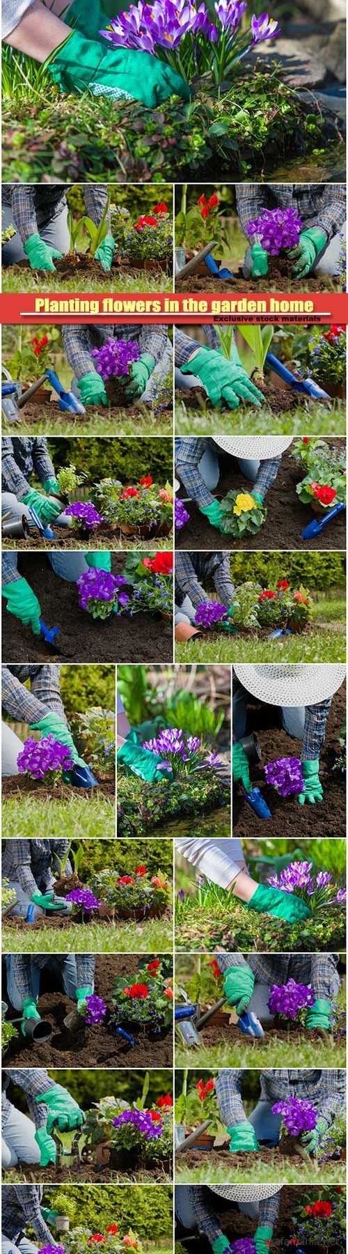 Planting flowers in the garden home