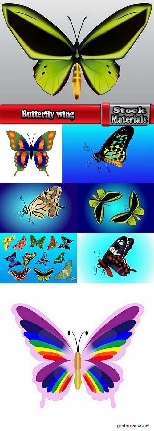 Butterfly wing 8 EPS