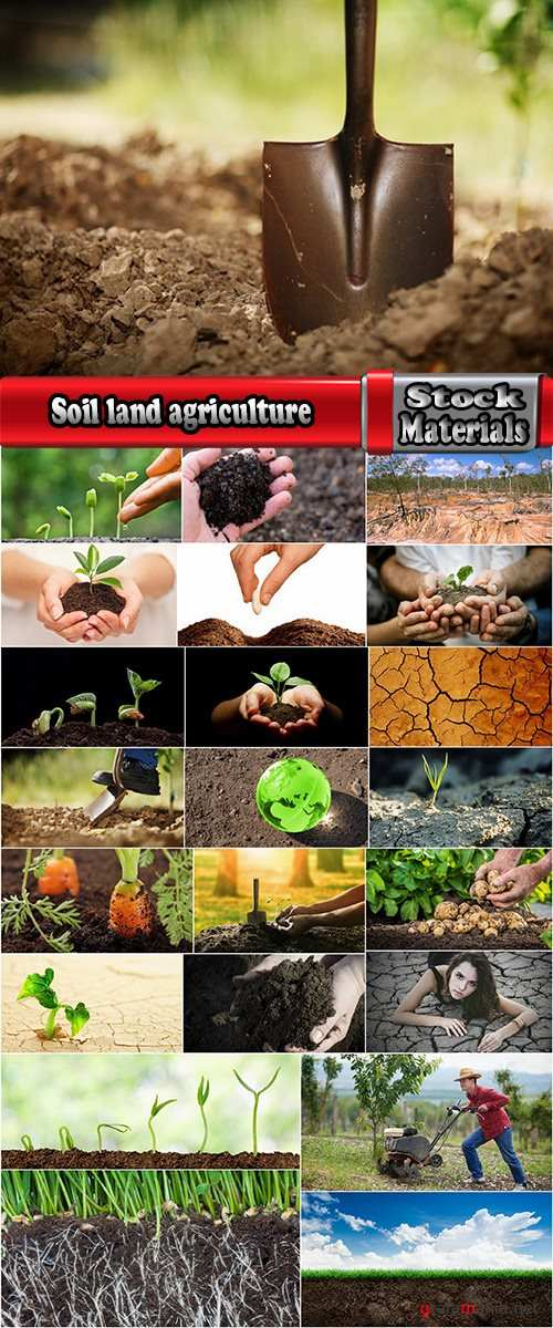 Soil land agriculture plant sprout shoot 25 HQ Jpeg