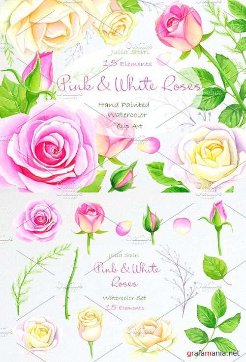 Pink &White Rose Watercolor Clip Art 937842