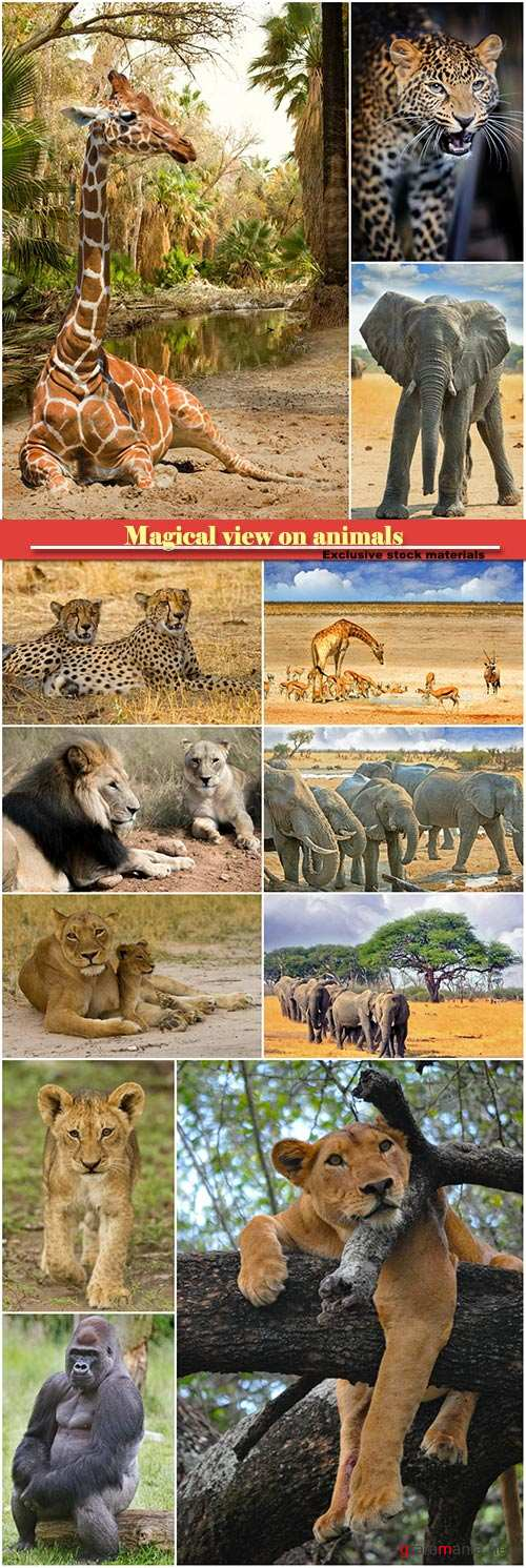 Magical view on animals, giraffe, elephant, lion, leopard