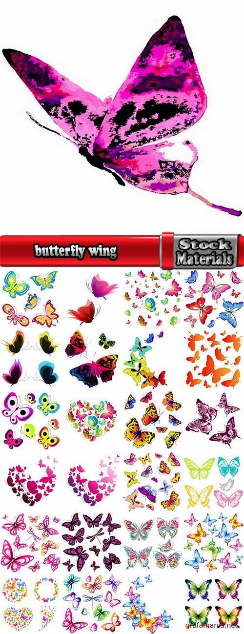 butterfly wing insect vector image 25 EPS