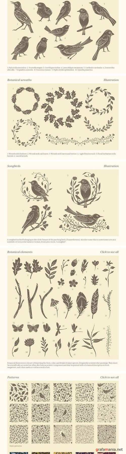 Songbirds graphic collection 1772001