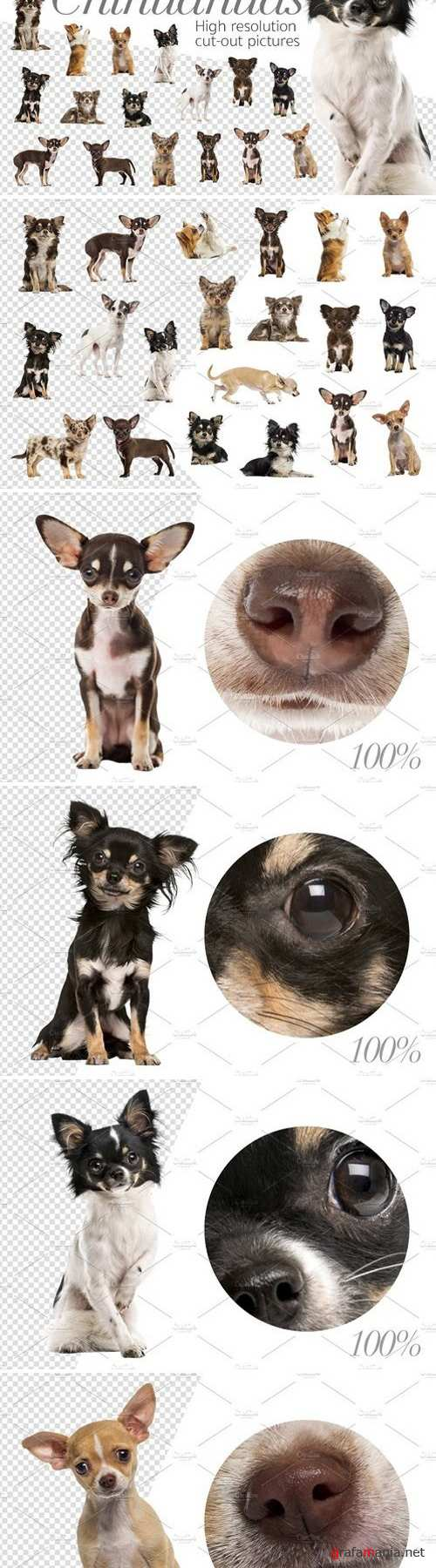 20 Chihuahuas - Cut-out Pictures 2042332