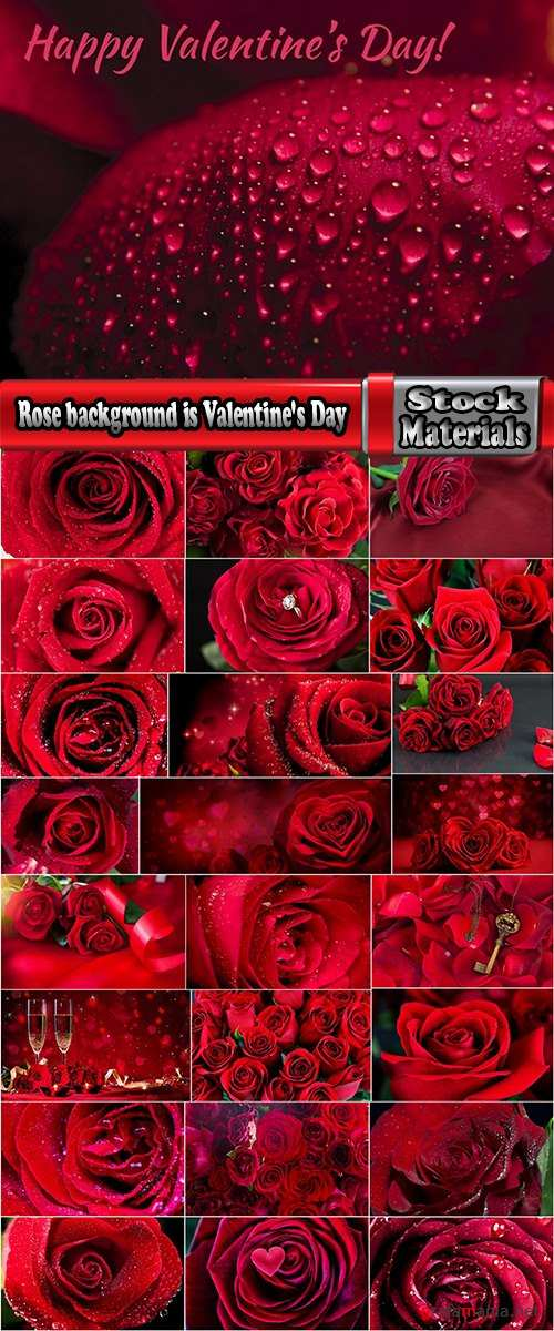 Rose background is Valentine's Day gift petal red flower 25 HQ Jpeg