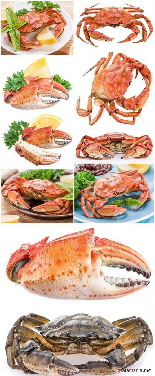 Crab with lemon and herbs 10X JPEG