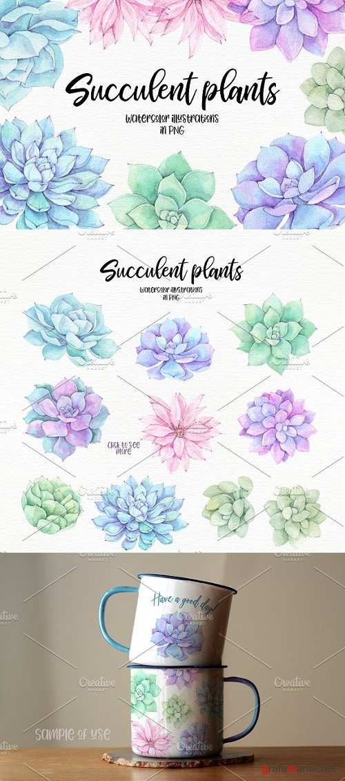 Succulent plants. Watercolor set - 2196092