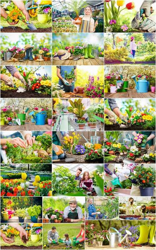 Gardening garden plants garden agriculture spring planting in the ground 25 HQ Jpeg
