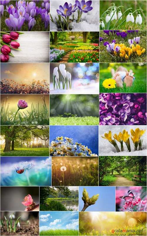 Spring nature forest grass sprout sprout tulip flower snowdrop 25 HQ Jpeg