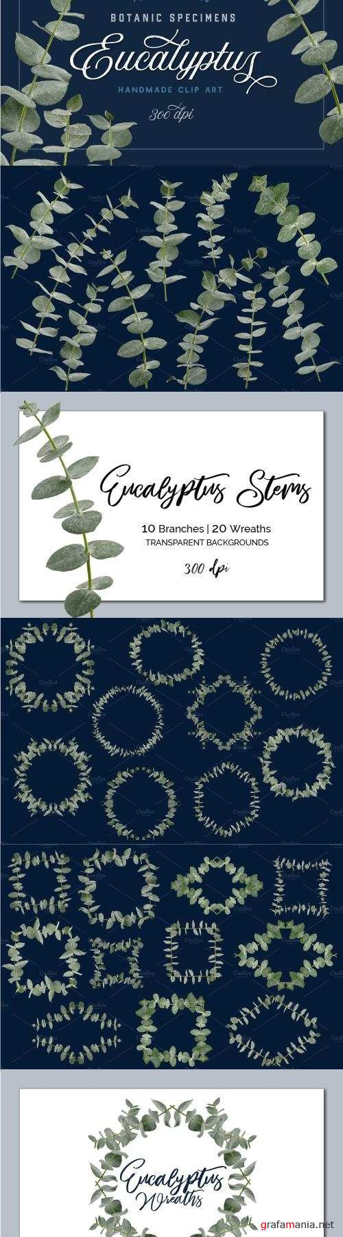 Eucalyptus Branches & Wreath ClipArt - 2250499
