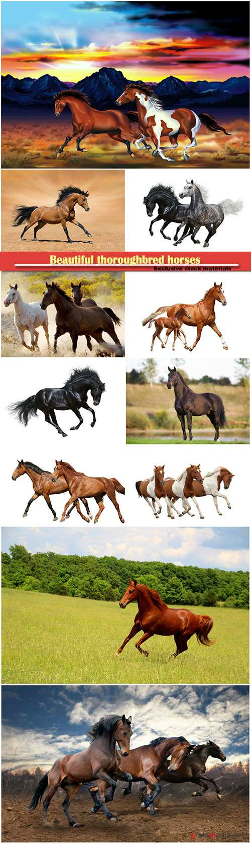 Beautiful thoroughbred horses