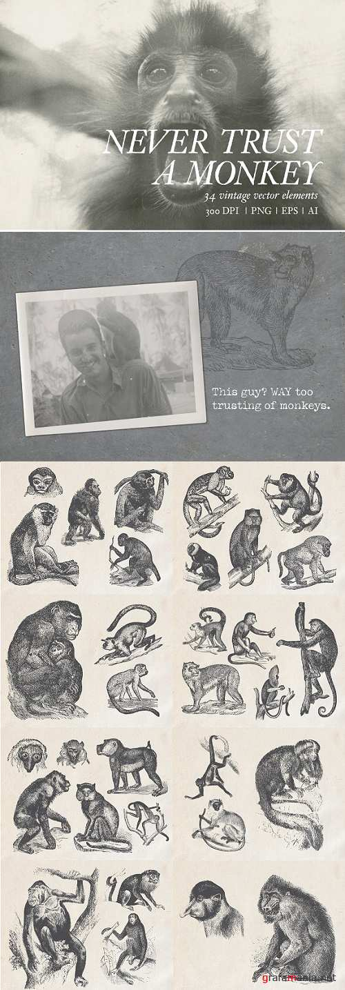 Never Trust a Monkey - Vintage Set - 2349641