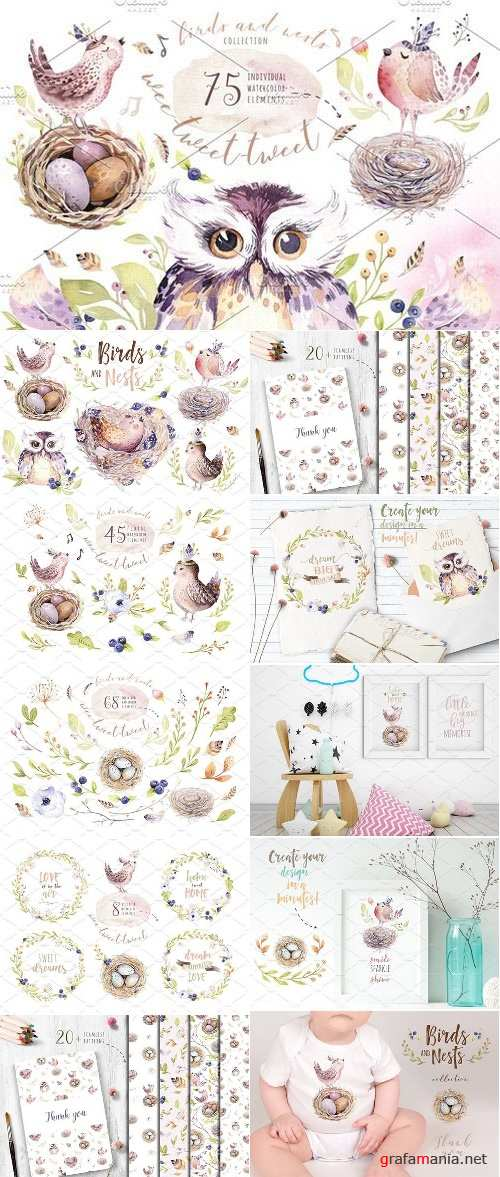 Birds and nests collection - 2404442