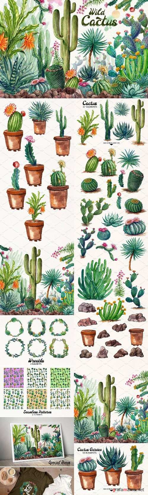 Watercolor Cactuses 1485736