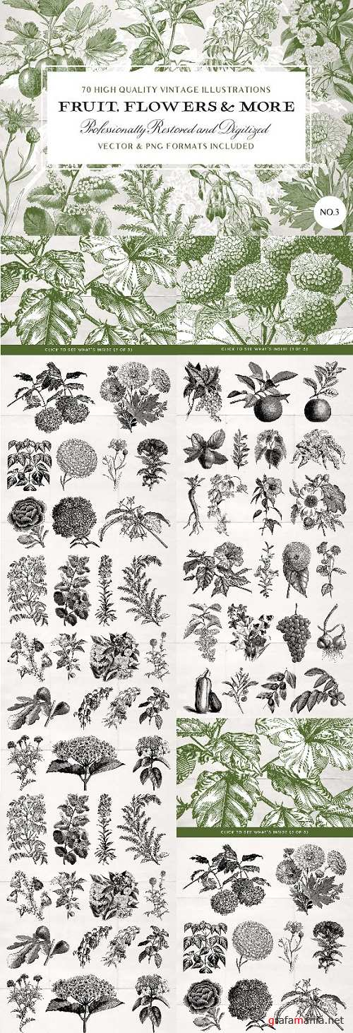 70 Flower & Fruit Illustrations No3 - 2414383