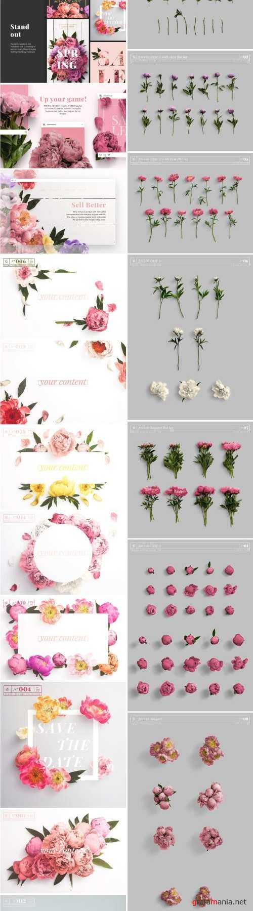 Floral Peonies Collection - 2303528