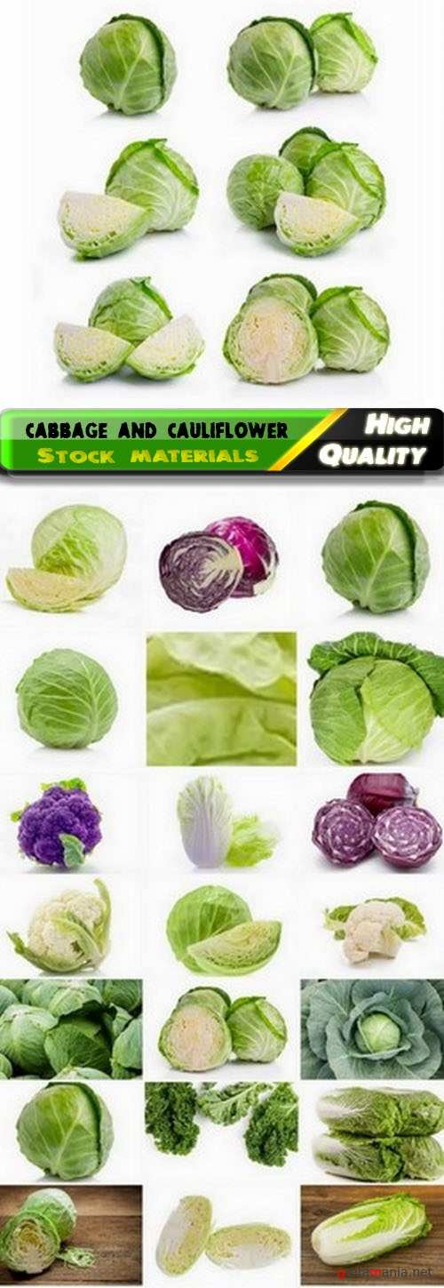 White and chinese cabbage and cauliflower 25 HQ Jpg