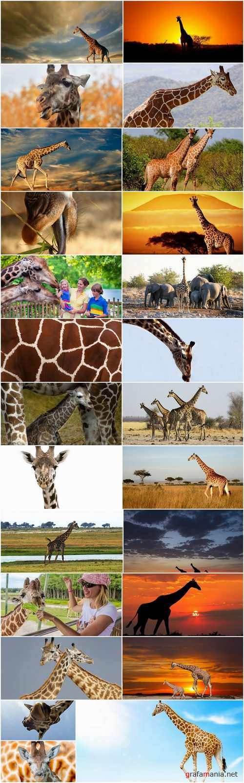 Giraffe long neck wildlife landscape 25 HQ Jpeg