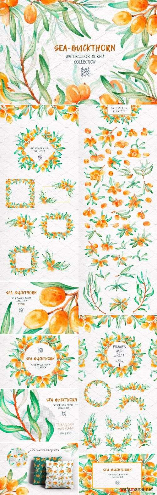 Sea-Buckthorn, Watercolor Collection - 2445710