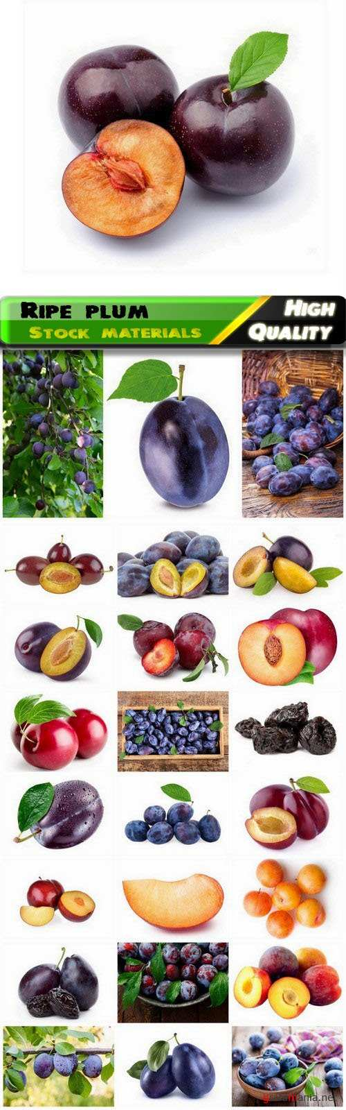 Different varieties of fruit pink and purple plum 25 HQ Jpg