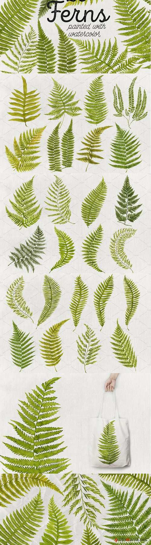 25 Watercolor Ferns - 2448978