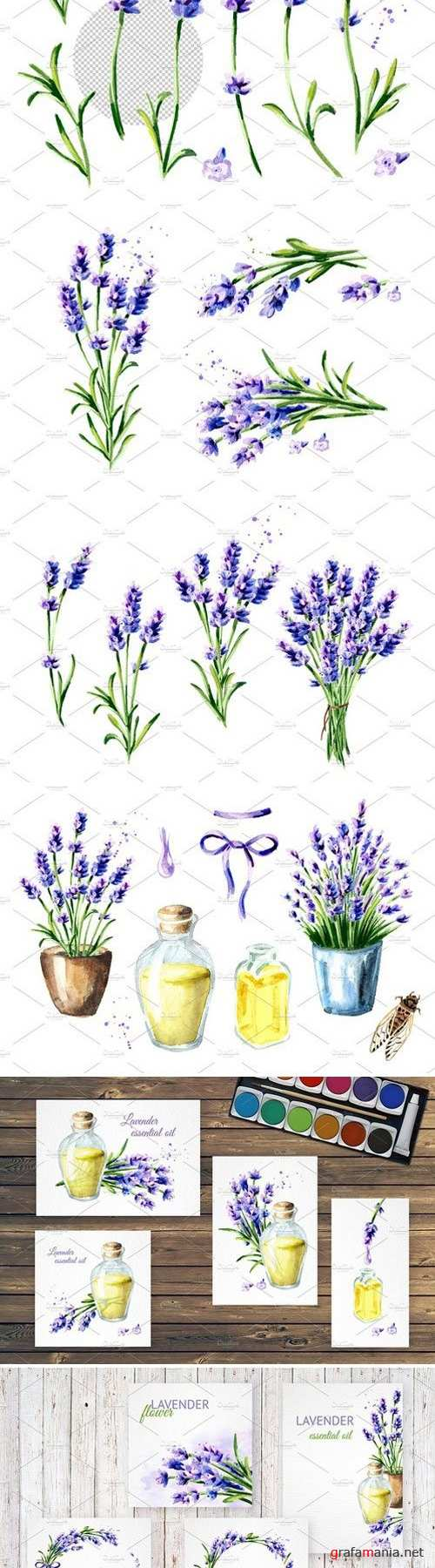 LAVENDER. Watercolor collection 2428832