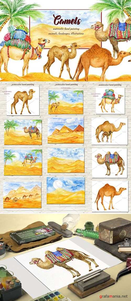 Camels Watercolor Illustrations 2396110