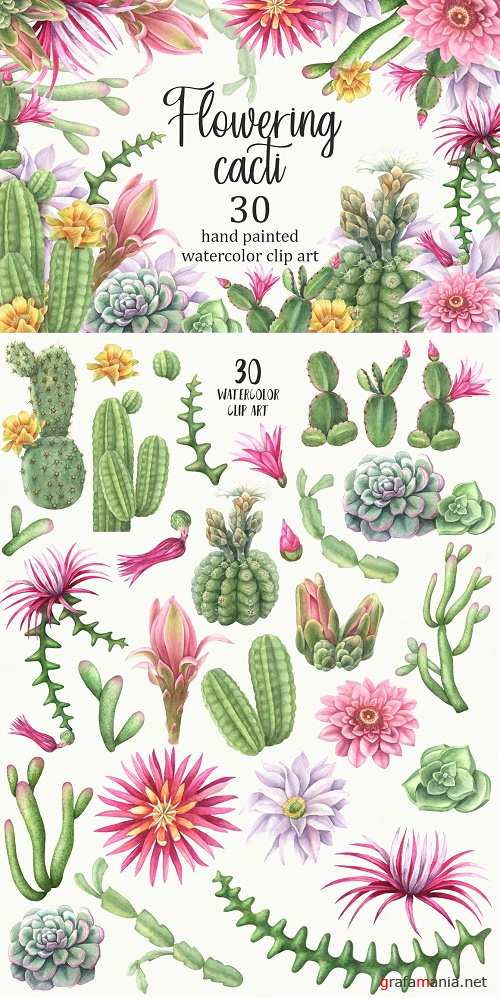 Watercolor flowering cacti 2517486