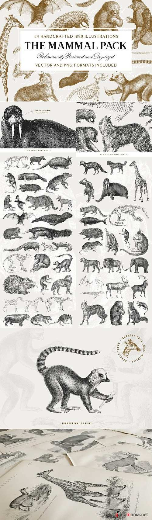 54 Handcrafted Mammal Illustrations - 2511172