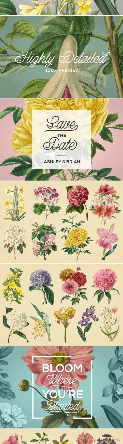 Vintage Illustrations of Flowers - 2448014