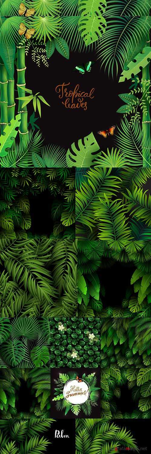 Summer tropical green leaves palm tree exotic backgrounds