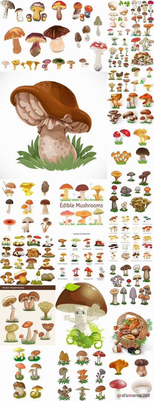 Mushrooms and fungi of different species breed class poisonous edible 25 EPS