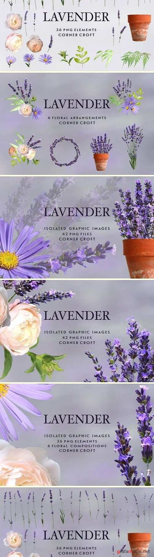 Lavender clipart, Isolated Lavender - 2795130