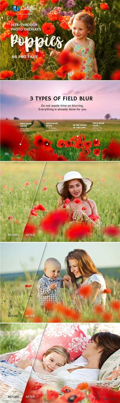 17 Poppie Flowers Photo Overlays - 3019394