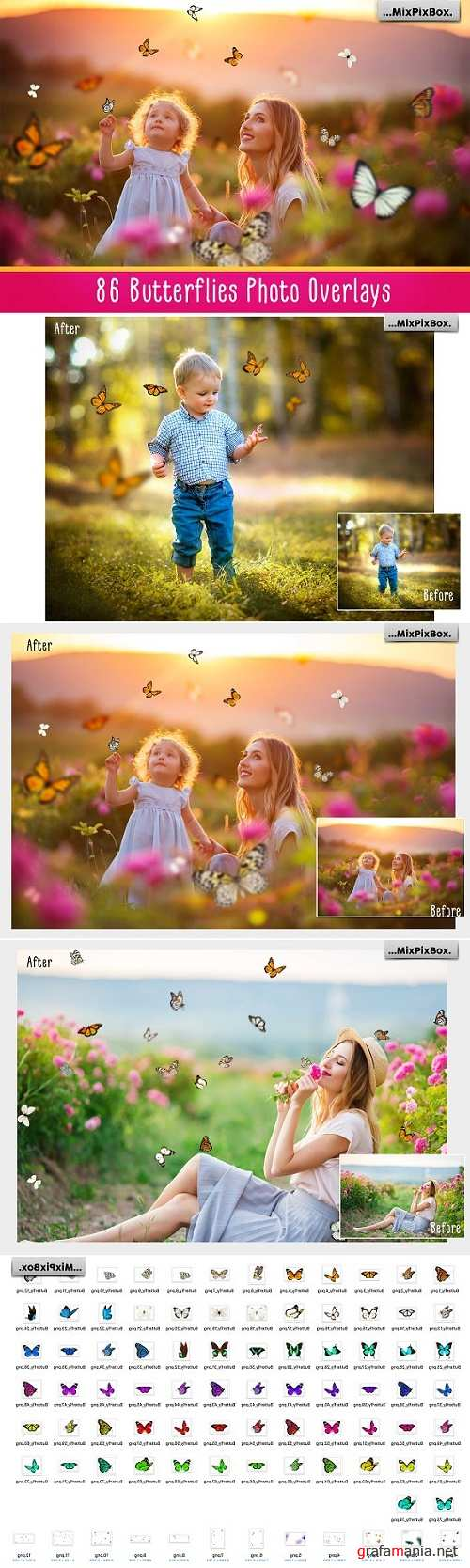 Butterflies Photo Overlays - 2572842