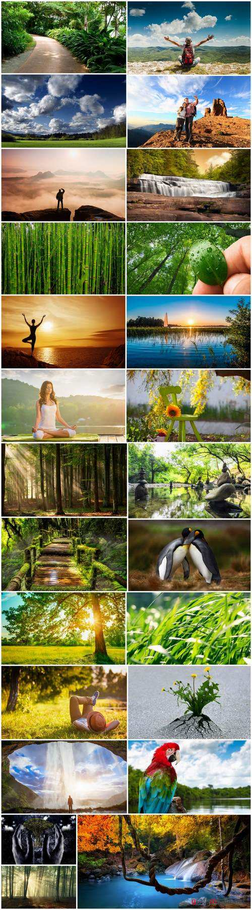 Nature landscape forest waterfall sprout vacation trip 25 HQ Jpeg